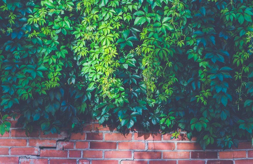 brick-wall-bricks-bright-227396.jpg