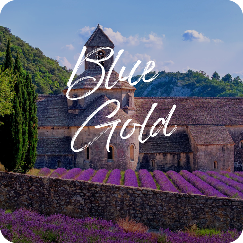 blue_gold_cover.png