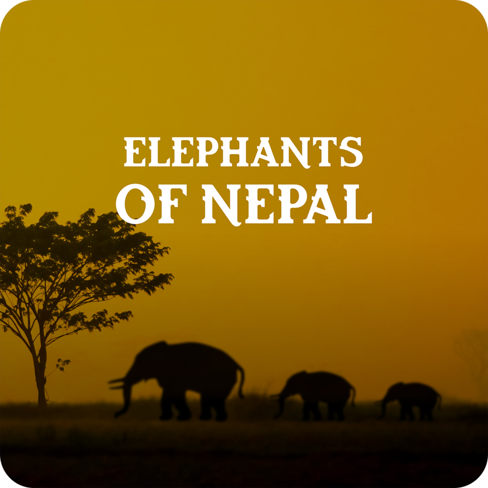 elephants of nepal.png