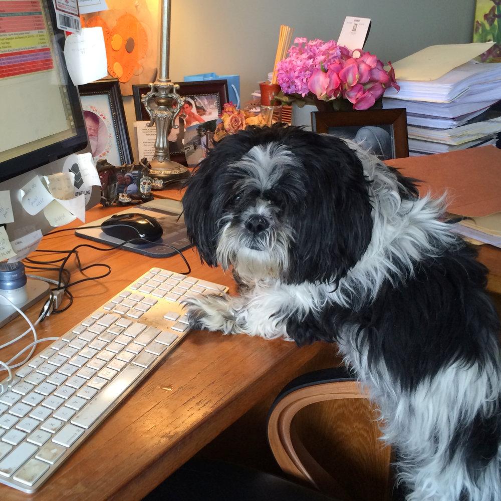 workdog.jpg