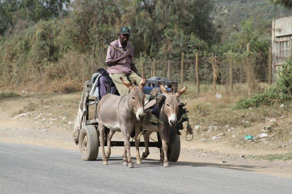 Kenya Aug 2013 2 192.jpg