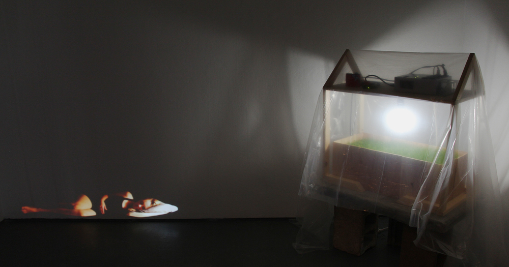 Empathy   ; wood, arduino, DMX board, dimmable LED, Johnson grass, clover, and projection; 2015