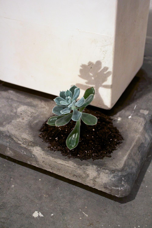 D. Memorial Plant Zoom_.jpg