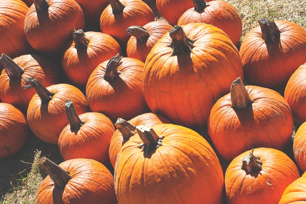 pumpkin8.JPG