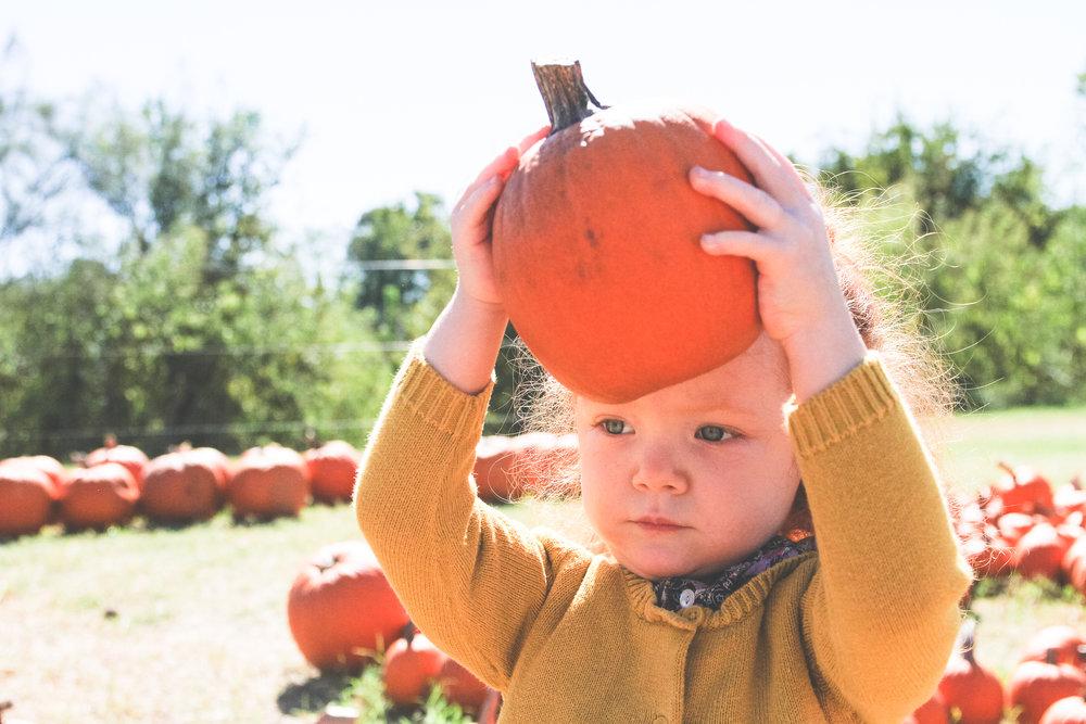 pumpkin75.JPG