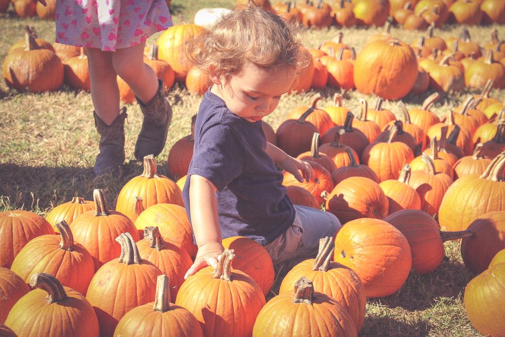 pumpkin64.JPG