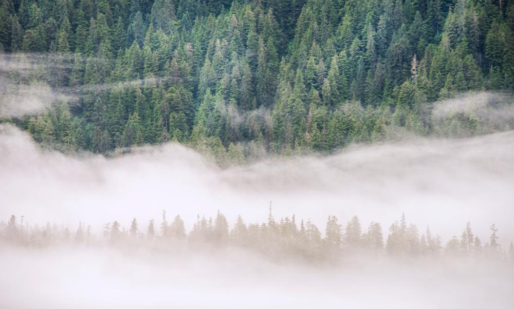 Alaska Forest & Fog