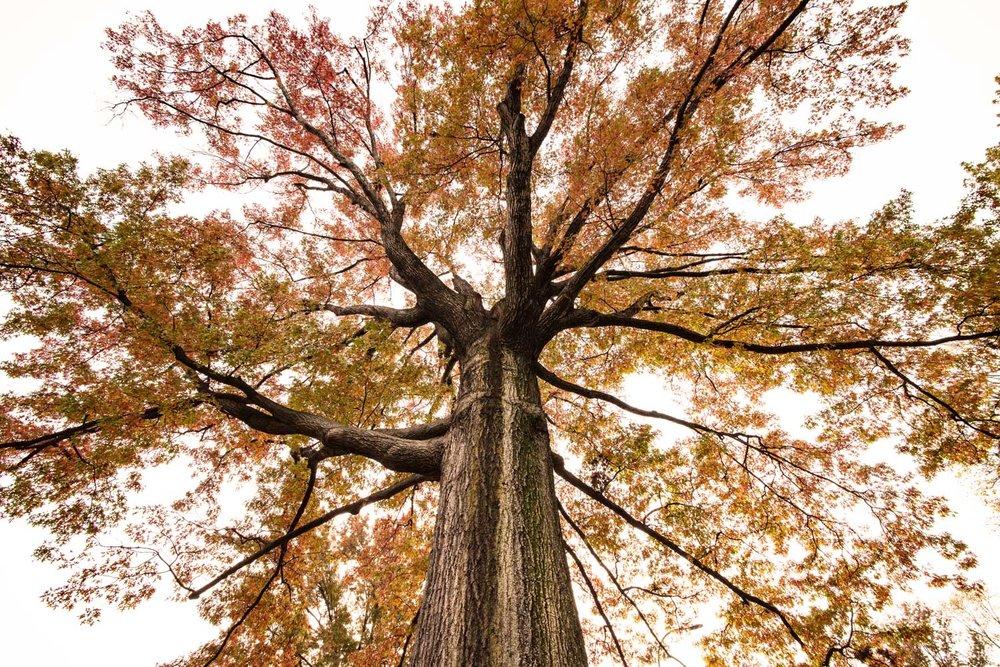 Sepia-Tree-NYC-by-Mary-Parkhill.jpg