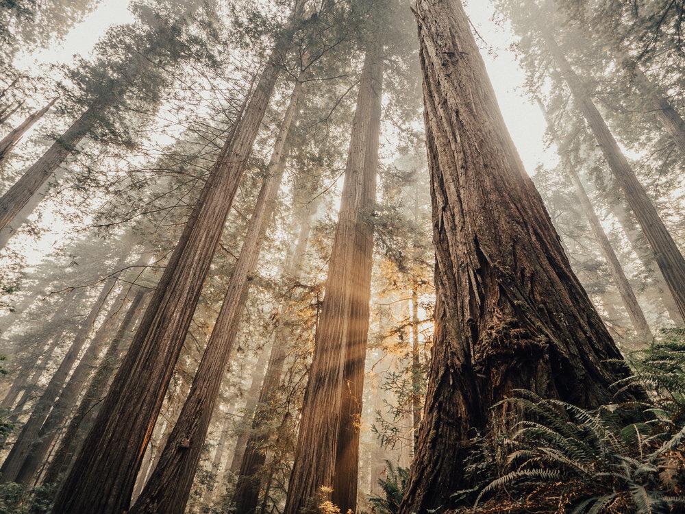 2017_JAMES_Oregon_03_43.jpg