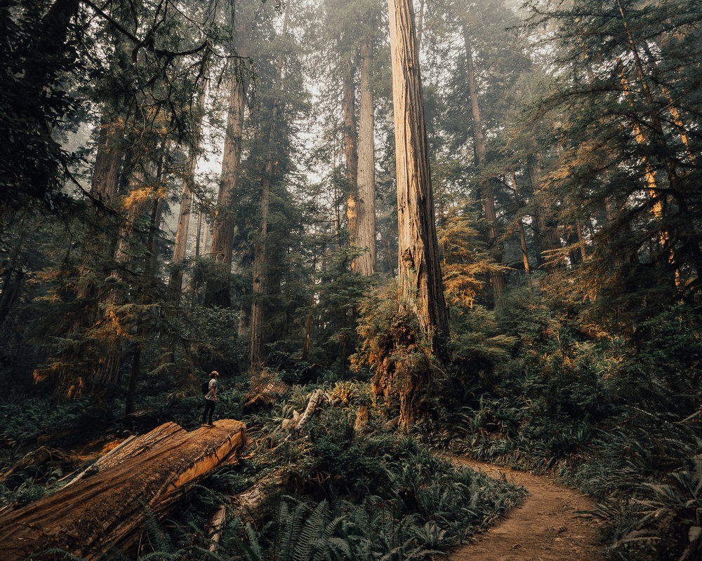 2017_JAMES_Oregon_03_38.jpg