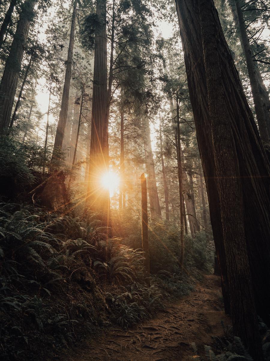 2017_JAMES_Oregon_03_31.jpg