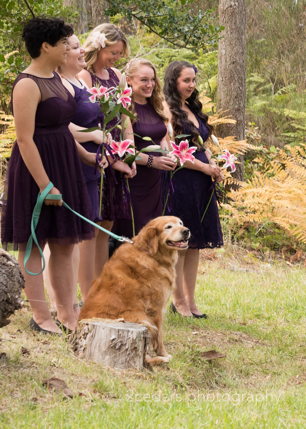 Bridesmaids and dog at during the ceremony