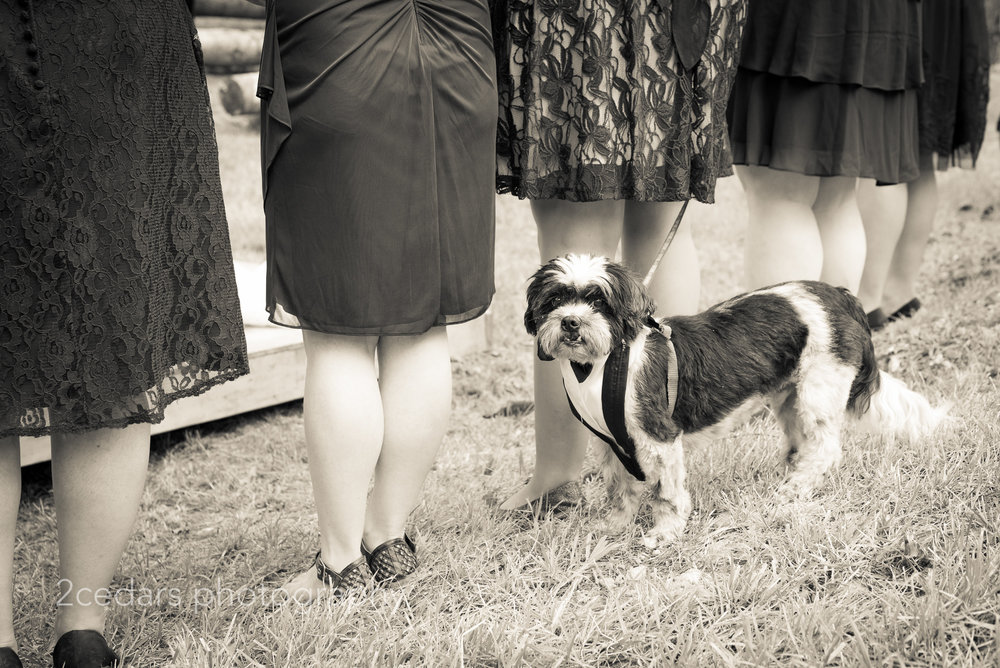 Black and white bridesmaids and dog in tux at outdoor wedding