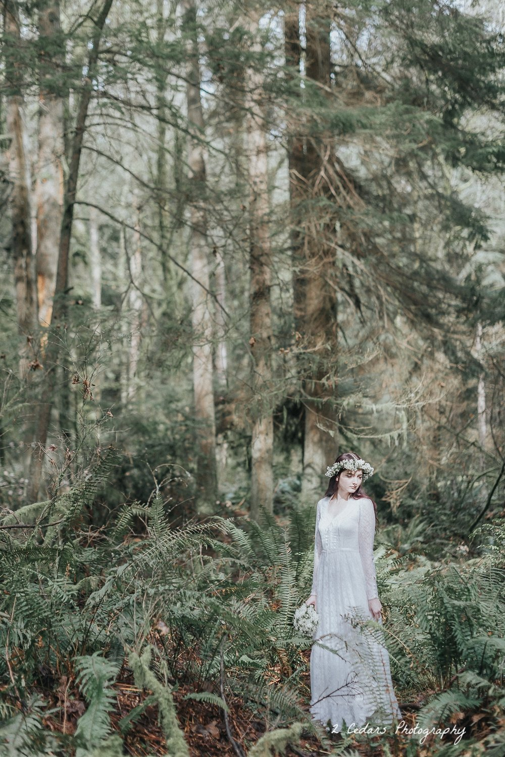 2 Cedars Photography - Seattle/Tacoma Photographers  Pacific Northwest forest bride in the sunlight
