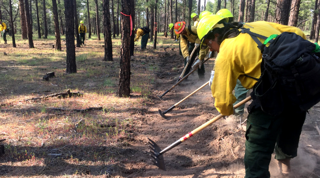 Salient lessons learned regarding how to build the next generation of wildfire practitioners. Credit: Forest Stewards Guild