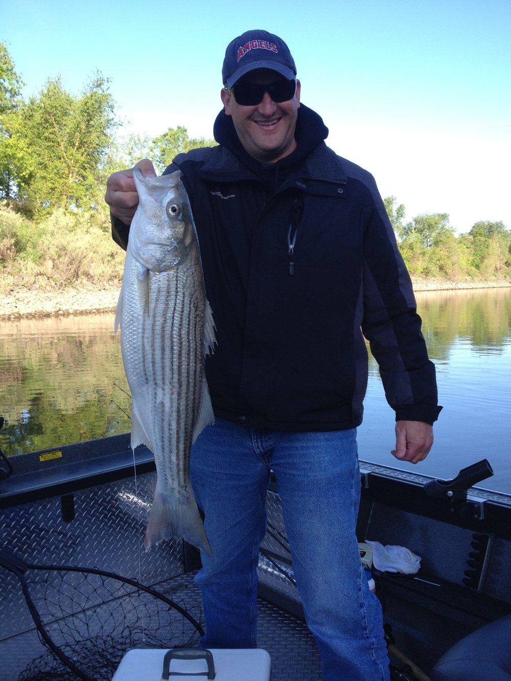 Sacramento River Striped bass.