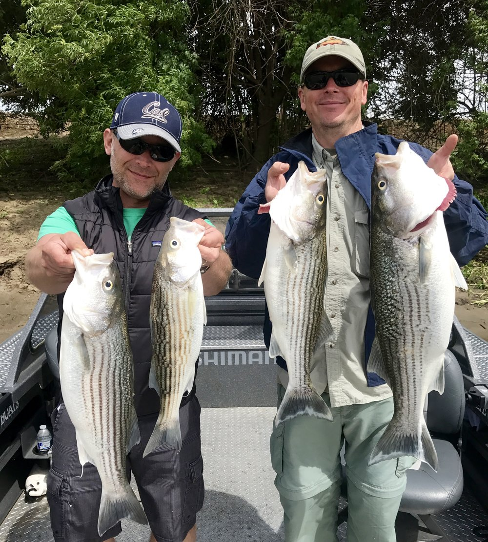 Limits of Feather River Striped bass.