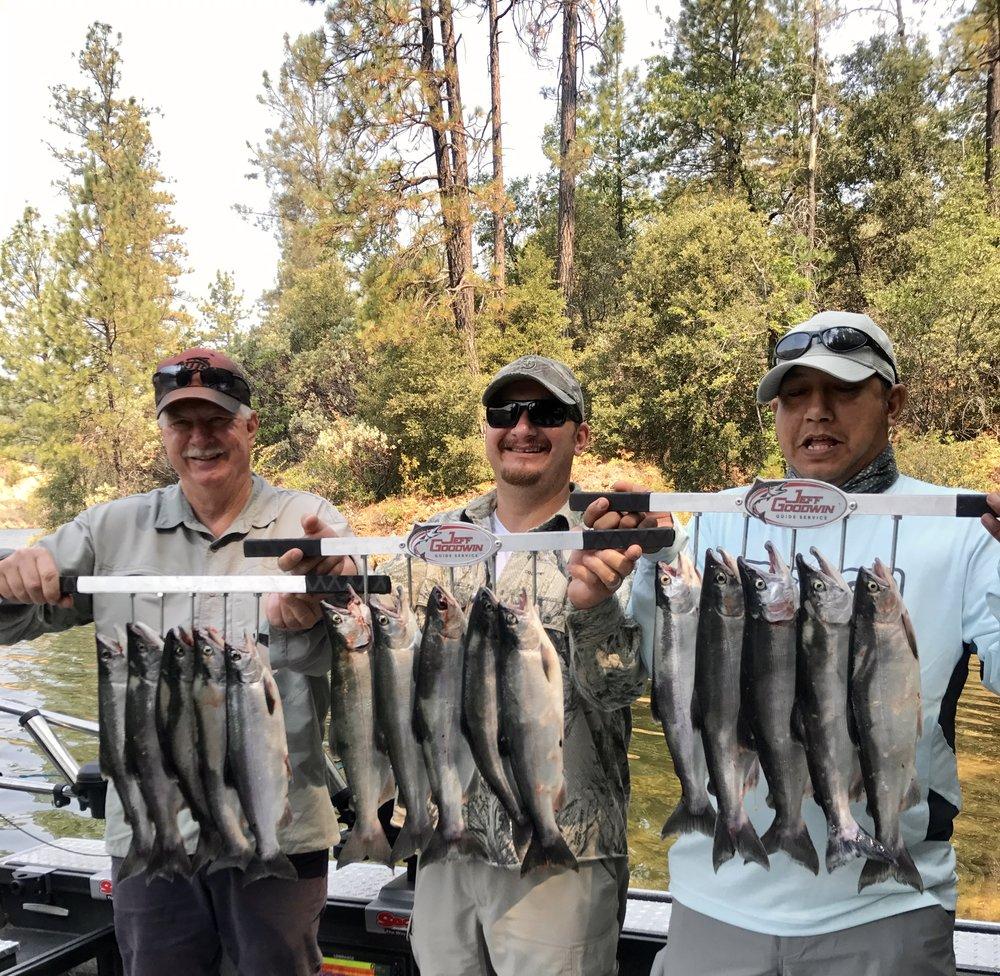 Limits of Whiskeytown lake Kokanee salmon this week!