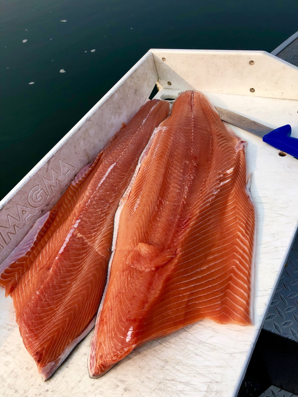 We're seeing ocean fresh fillets from these bright King salmon!
