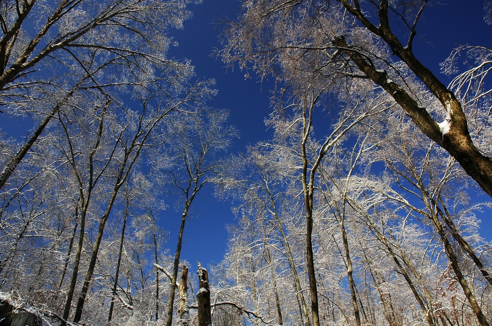 Frozen Trees at Hemlock Cliffs, Indiana