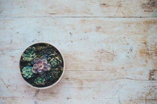 pexels-photo-309269 - succulents.jpg