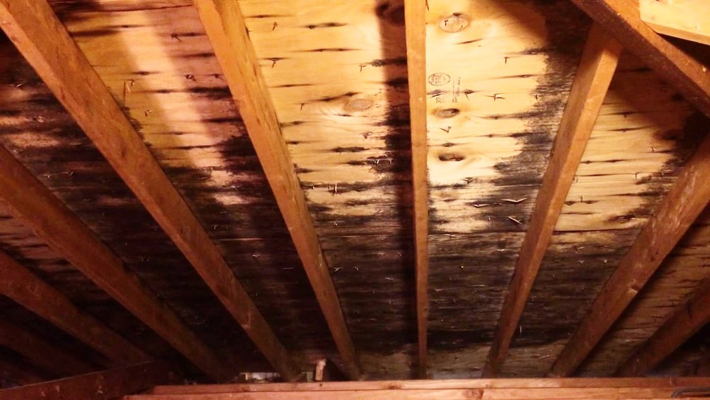 Mold on roof sheathing