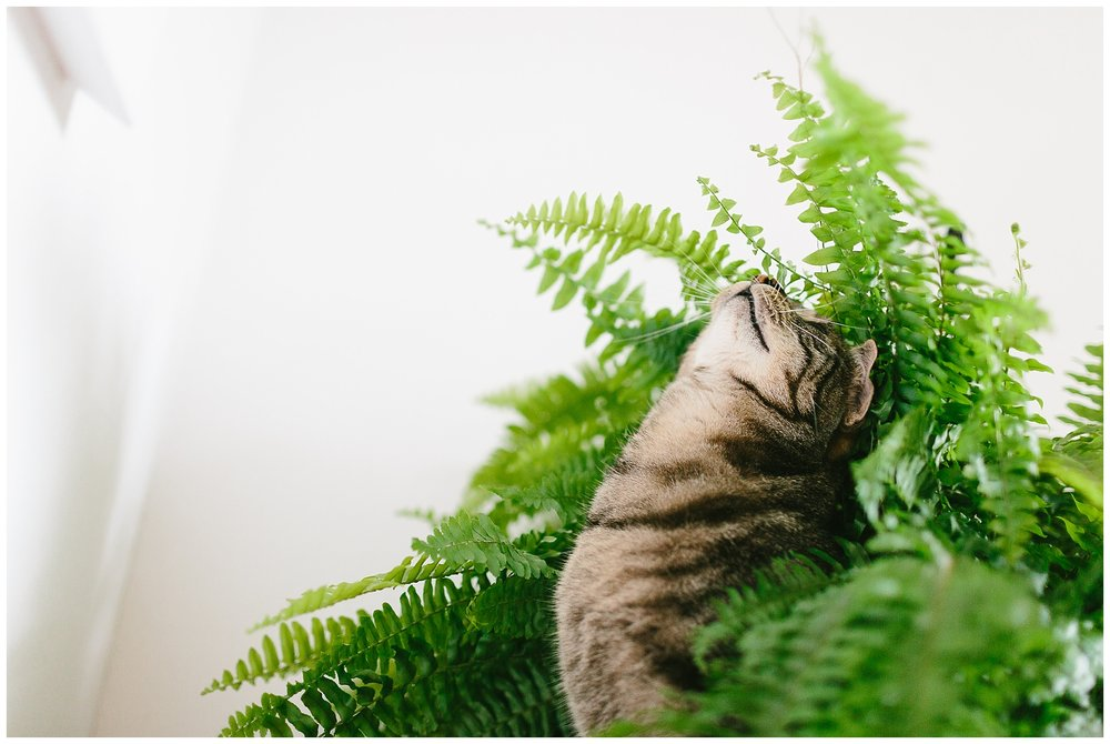 Majestic. This poor fern.