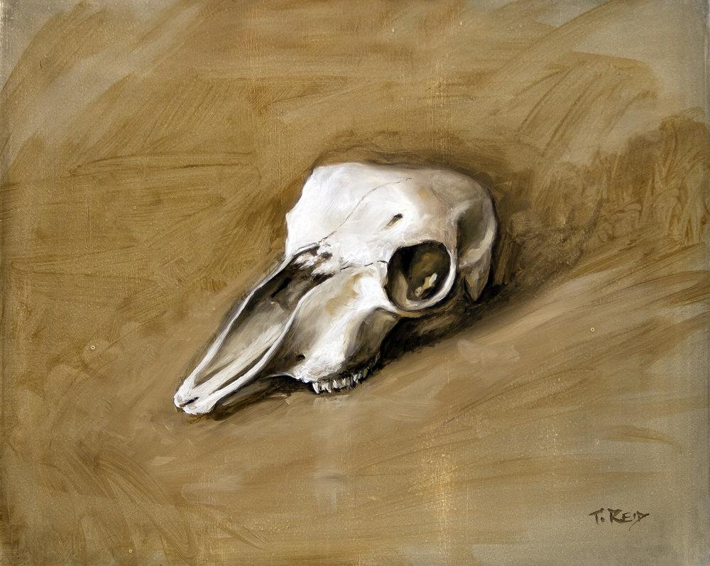 Skull 1, oil on panel