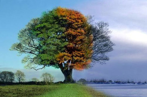 4-seasons-1-tree.jpg