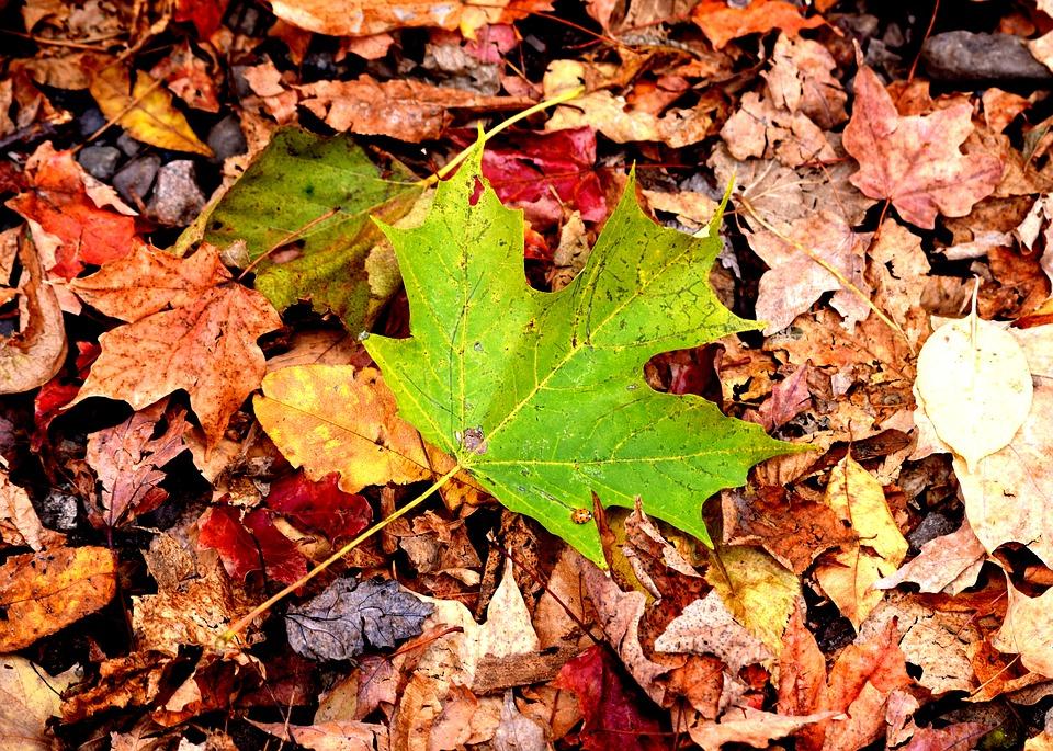 leaves-2291541_960_720.jpg