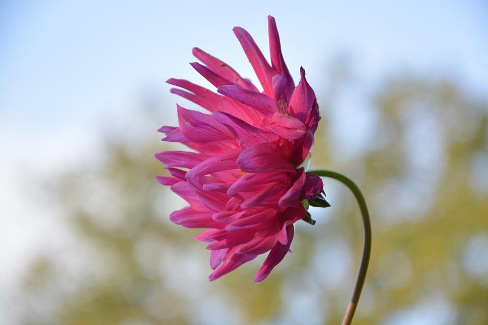 flower-2775051_960_720.jpg