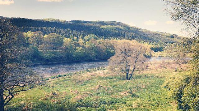 Beautiful Dalmarnock Fishings on the River Tay! 🎣 🎣 🎣 🎣 #salmonfishing #salmonfishingscotland #atlanticsalmon #atlanticsalmonfishing #visitscotland #lovescotland #highlandperthshire #dalmarnockfishings #rivertay #tayghillie #ferniehaugh #vacationscotland #ruralscotland