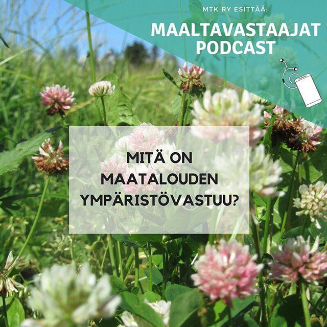 Mitä on maatalouden ympäristövastuullisuus? . . . Kuuntele Maaltavastaajat jakso 14: Maatalouden ympäristövastuullisuus. @heidisiivonen seurassa MTK:n ympäristöjohtaja Liisa Pietola sekä maitokarjatilalliset MTK-Keski-Pohjanmaan pj Atso Ala-Kopsala ja MTK-Keski-Pohjanmaan pj Tero Lahti. Linkki biossa 👆 #maaltavastaajat #mtkry #mtk #maatalous #ympäristövastuu #ympäristölupaus #ympäristölupaukset