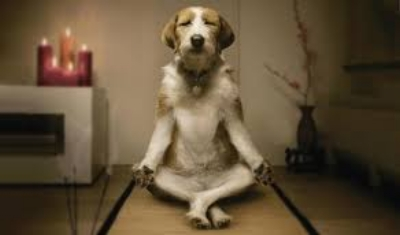 A Dog Practicing Yoga.jpg