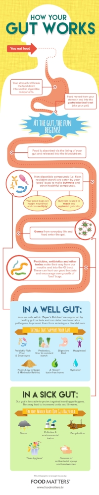 Infographic About How The Gut Works.jpg