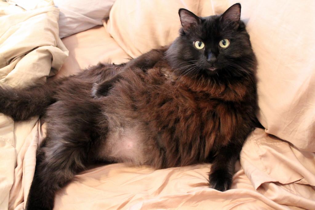 Salem beast