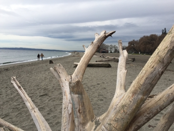 There's no place like home. A perfect winter day at Golden Gardens park in Seattle.