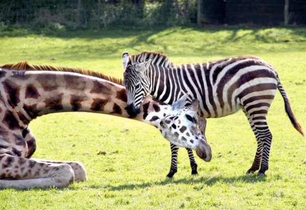 """Some people seek """"The Big Five"""" and we're all for it - but these two are on Debbie's must see list."""