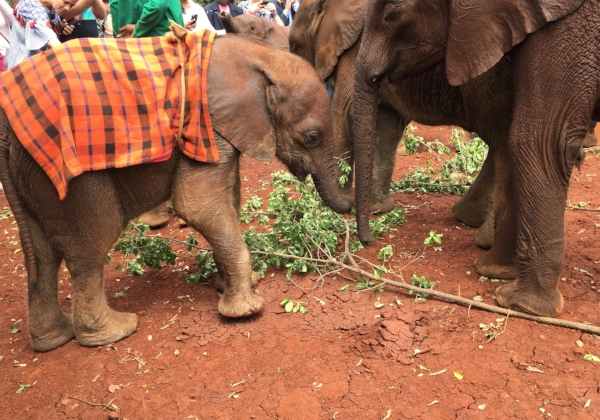 Dozens of enchanting baby elephants were fun to watch, but sadly, they were orphaned by poachers or often found in abandoned wells. This organization is able to return a large number to the wild.