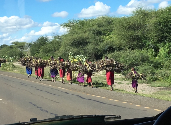 We saw many Maasai people during our twelve days in Tanzania. Often we'd see women and children carrying firewood or water along the side of the road while the men and boys herded cattle.
