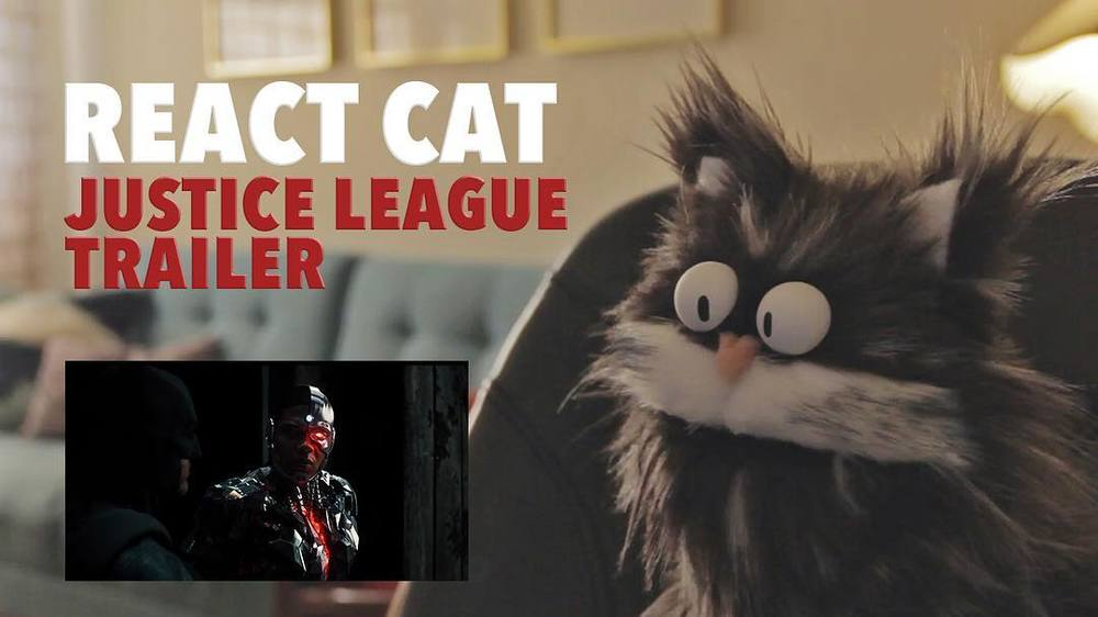 Here he is! Meet Toby in his first video!! Watch his reaction to the new #justiceleague #trailer! Link in bio!! #cat #catsofinstagram #puppet  http://ift.tt/2afSxvV