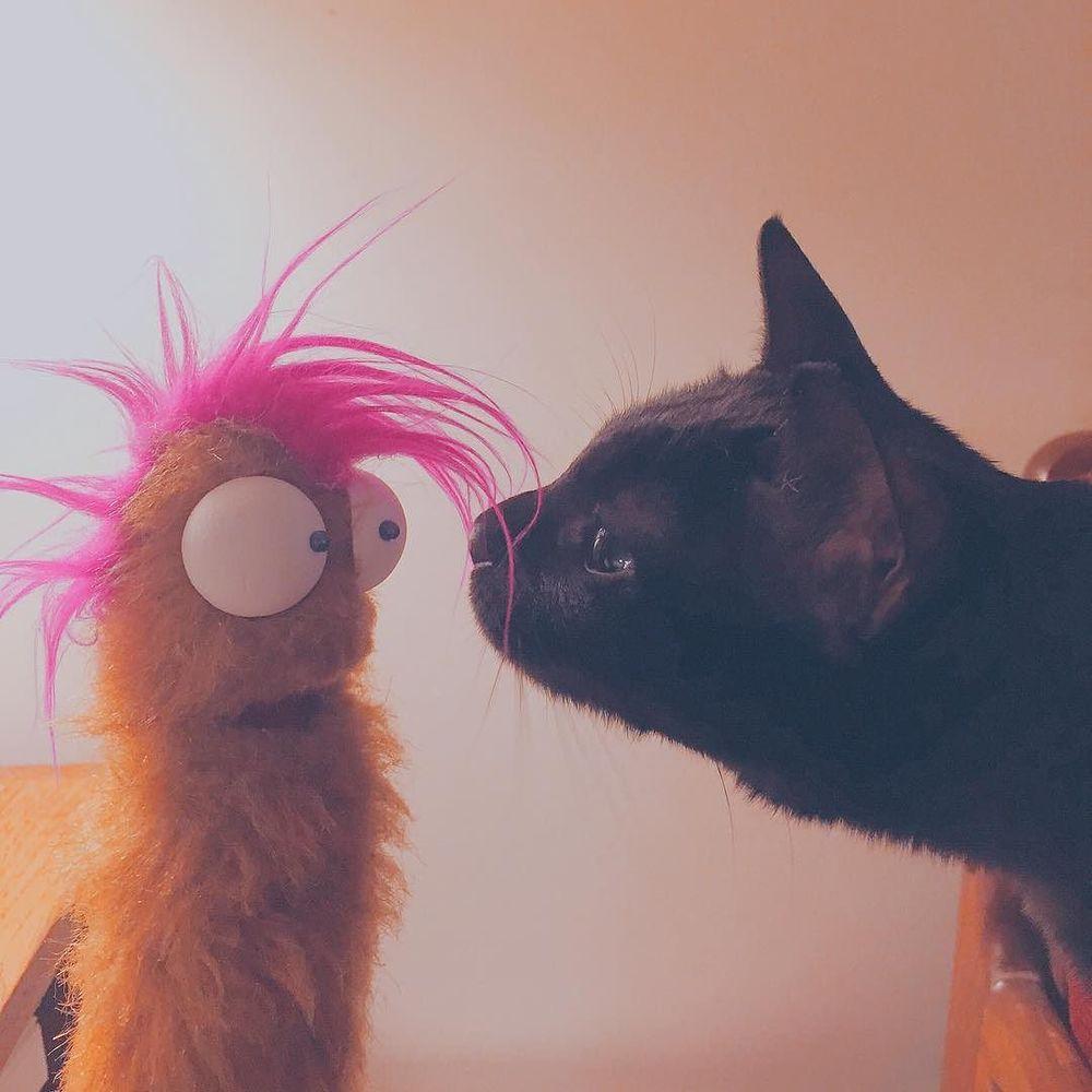 Rita makes a new friend. #puppet http://ift.tt/1UDMm49