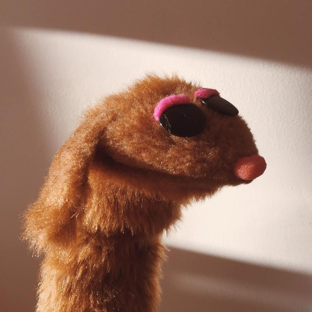 🎶don't you! Bah dah duhn dum! Forget about me!🎶 #puppet http://ift.tt/1UTfhSb