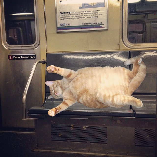 After asking for some change. Kitty Hobo passed out on the C train.