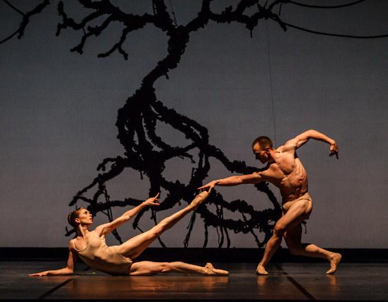 Ballet Austin Tree.jpg