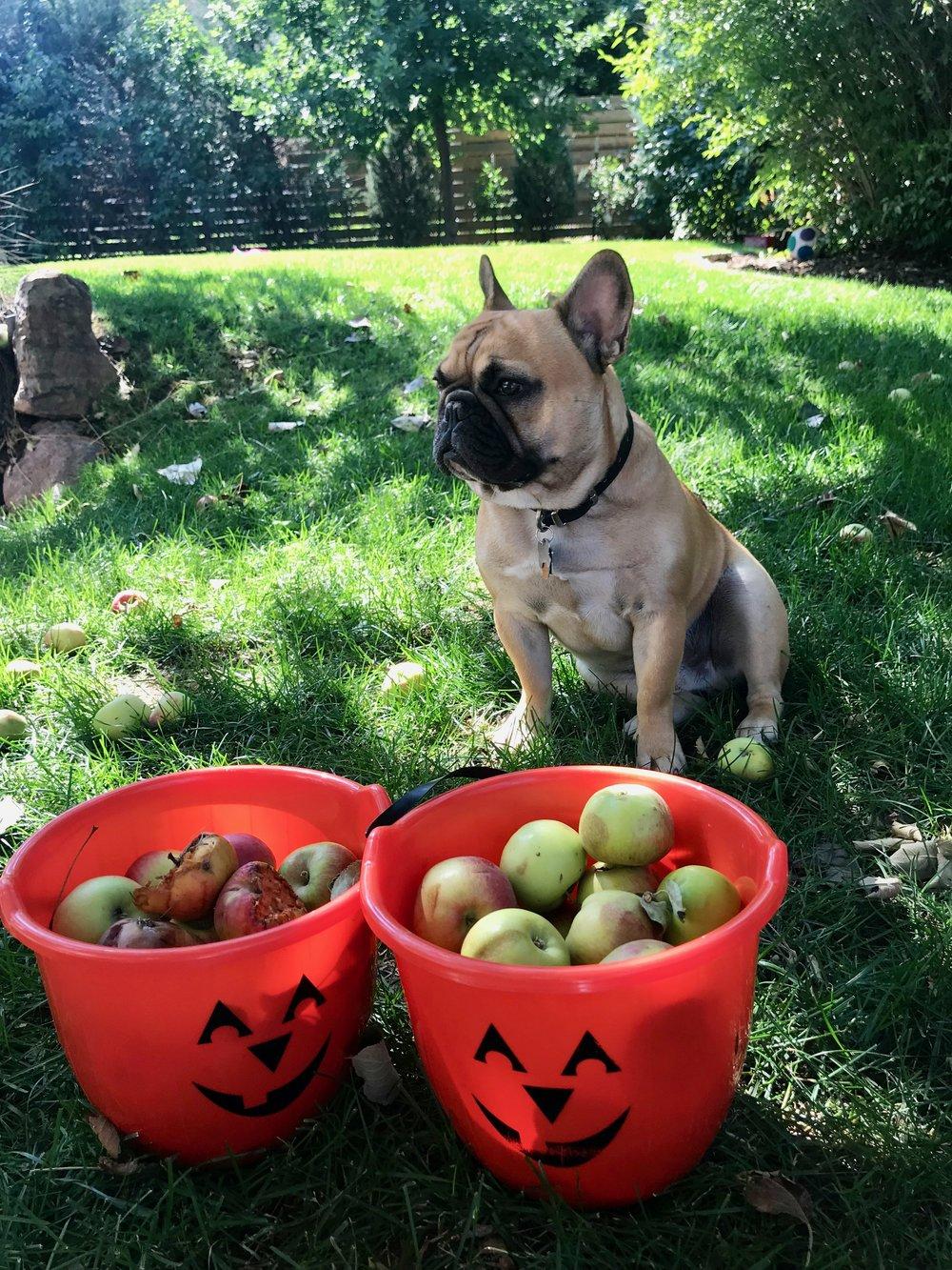 apple halloween buckets.jpg