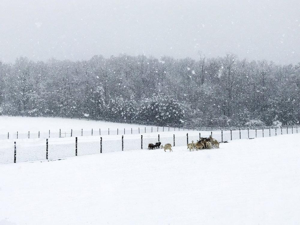 SHF+snow+photo+8.jpg