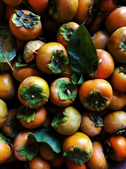 Persimmons / Stone Hollow Farmstead CSA