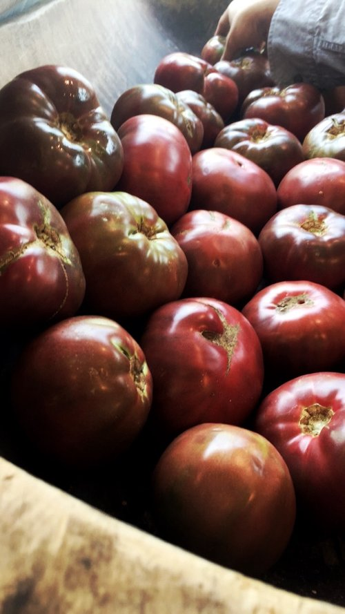 Cherokee Purple Tomatoes / Stone Hollow Farmstead CSA
