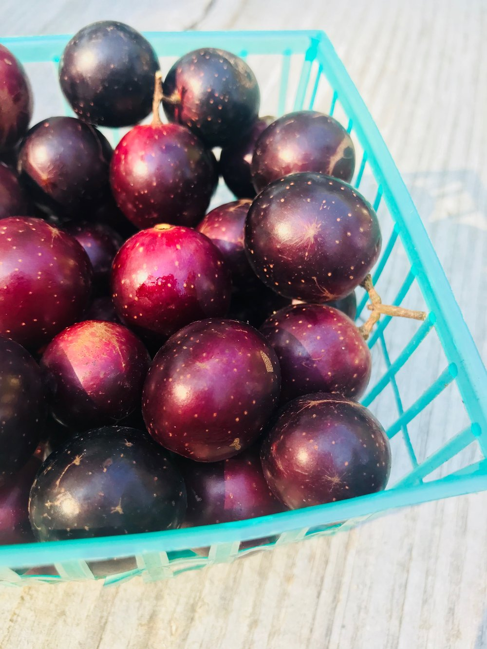 Muscadines /  Chilton County